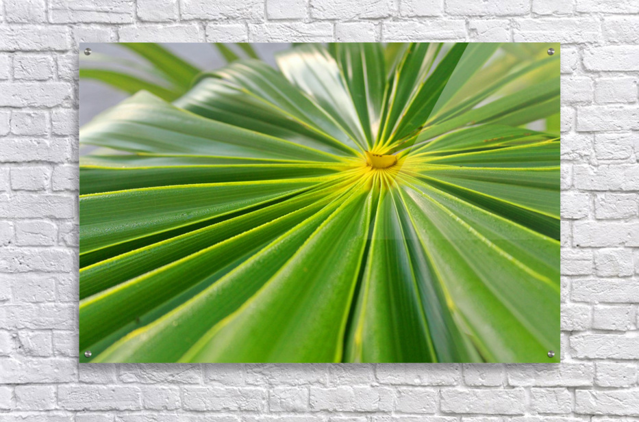 Beautiful Green  Acrylic Print