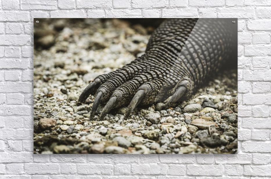 Dragons Claw  Acrylic Print