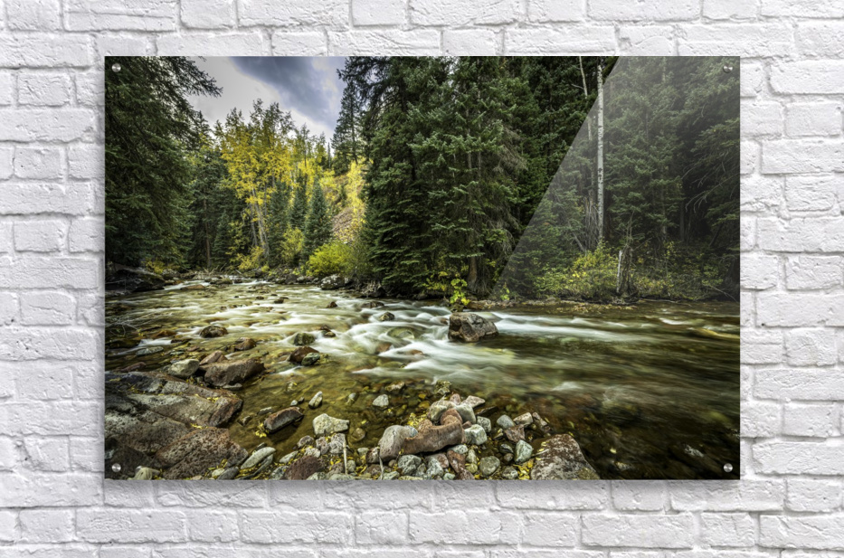 Rocky Mountain Forest  Acrylic Print