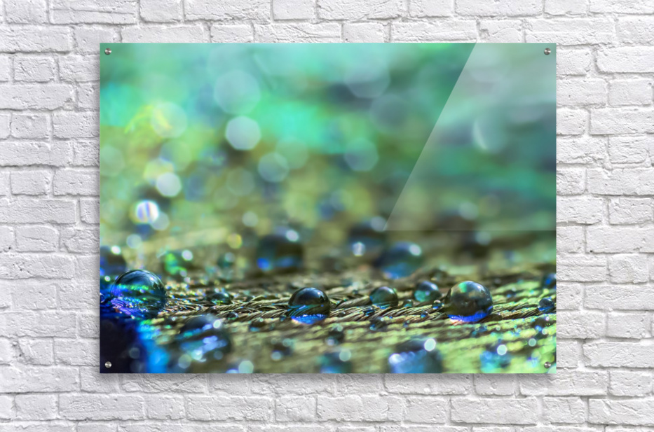 Shimmering Peacock Feather  Acrylic Print