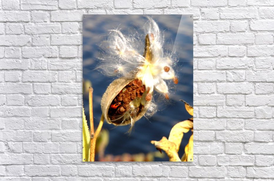 Wild Thing  Acrylic Print