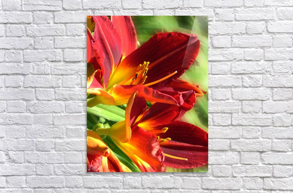 Firecrackers  Acrylic Print