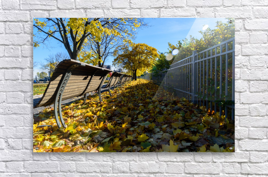 Autumn leaves in the park  Acrylic Print