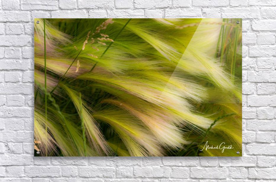 Grasses Of Summer  Acrylic Print