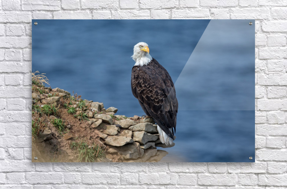 Perched and Proud  Acrylic Print