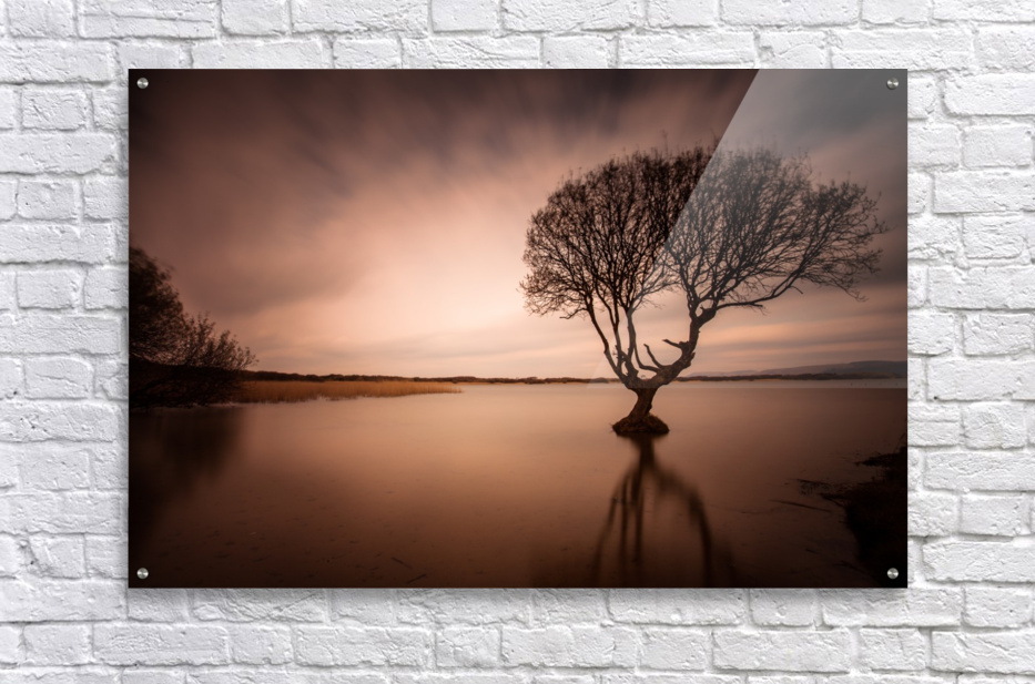 The Kenfig Tree  Acrylic Print