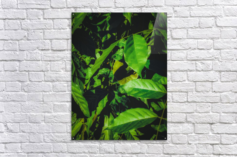 green leaves texture background  Acrylic Print