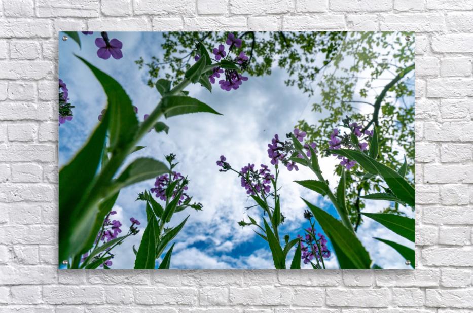 Skyward 2  Acrylic Print