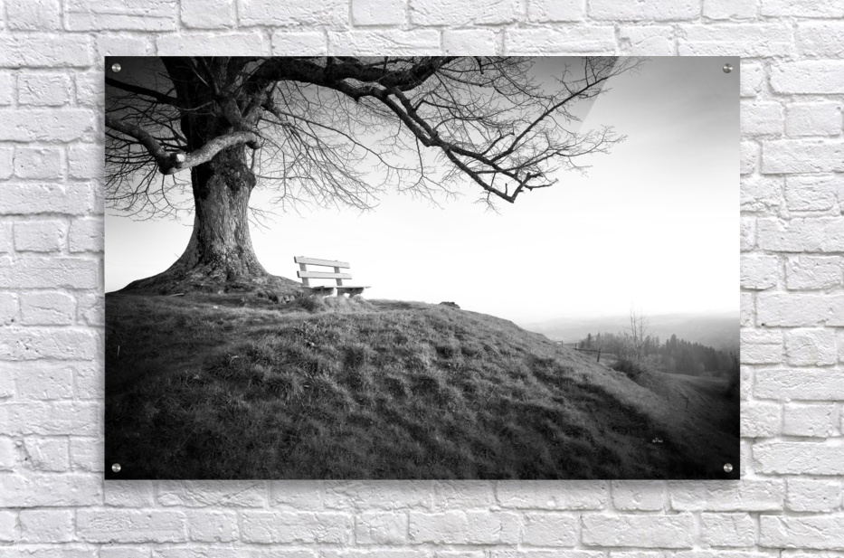 lonely bench under a tree  Acrylic Print