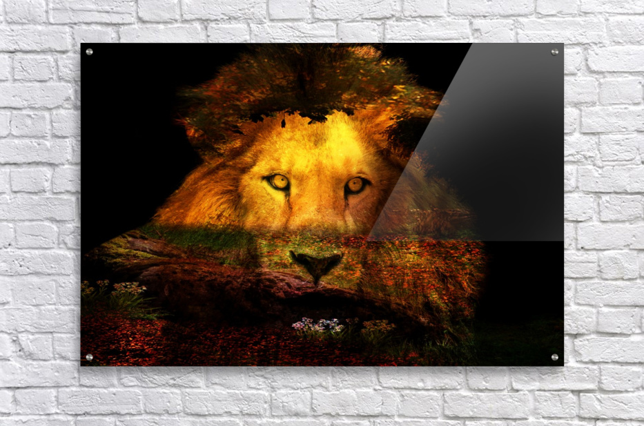 The Lion Watches  Acrylic Print