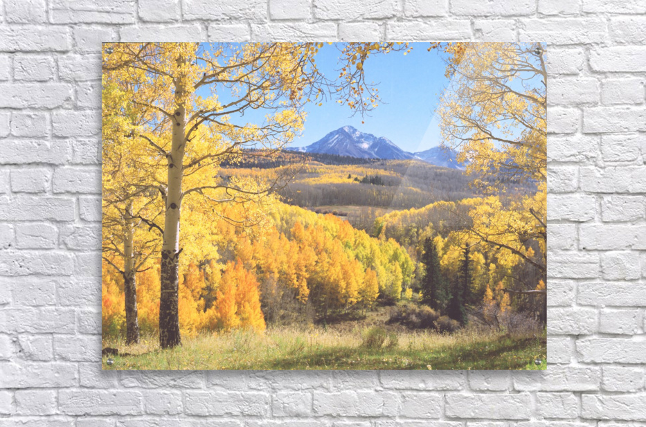 Sunshine Peak through the Aspen  Acrylic Print