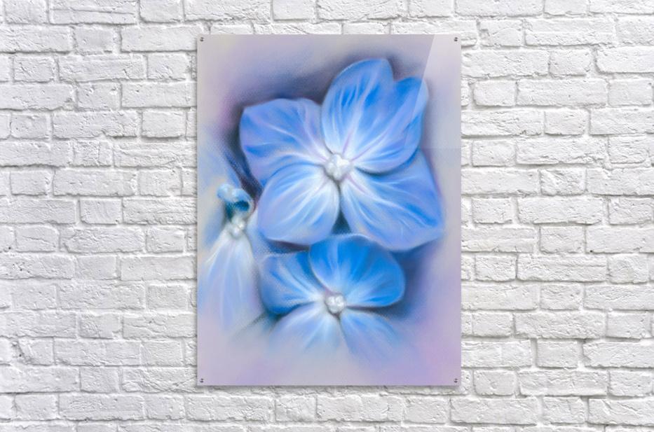 Blue Hydrangea Blossoms  Acrylic Print