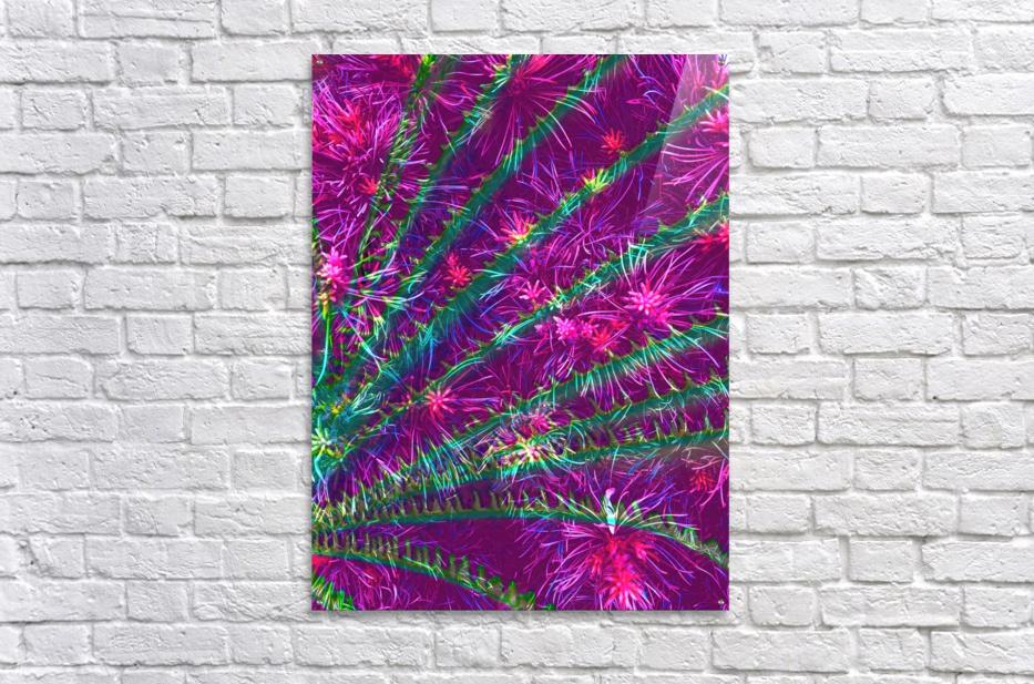 Elegant Fan  Acrylic Print
