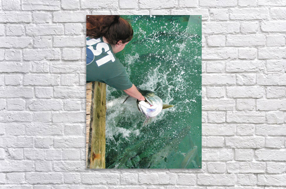 Tarpon Feeding  Acrylic Print