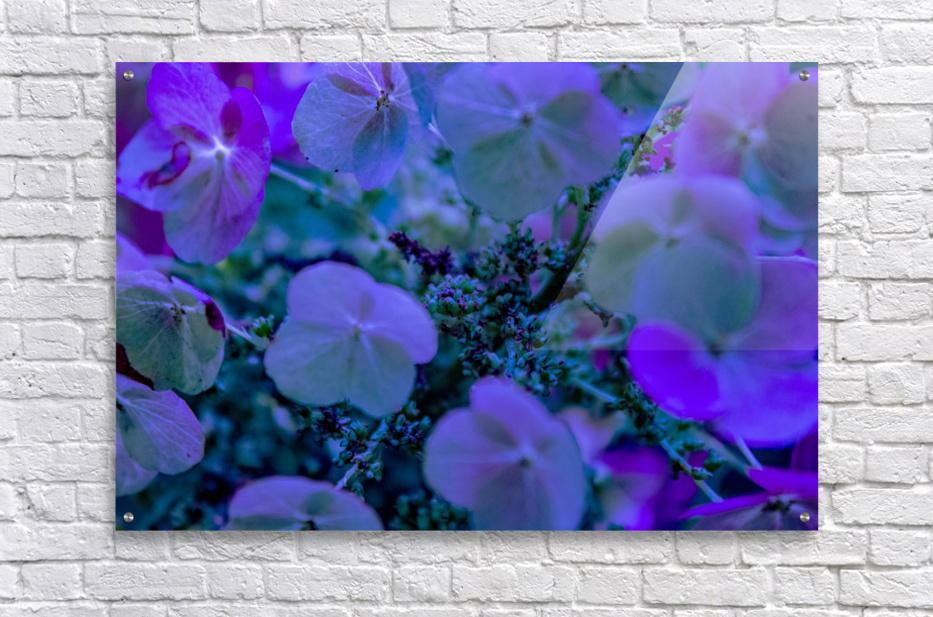 IMG_2616  Acrylic Print