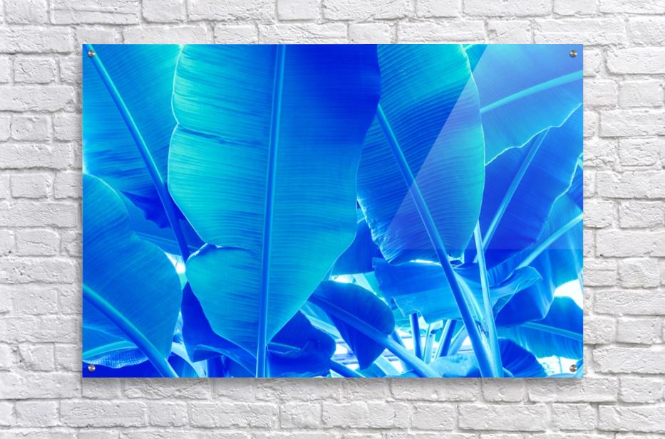 Blue Bananas - Re-Imagined Tropical Biophilia  Acrylic Print