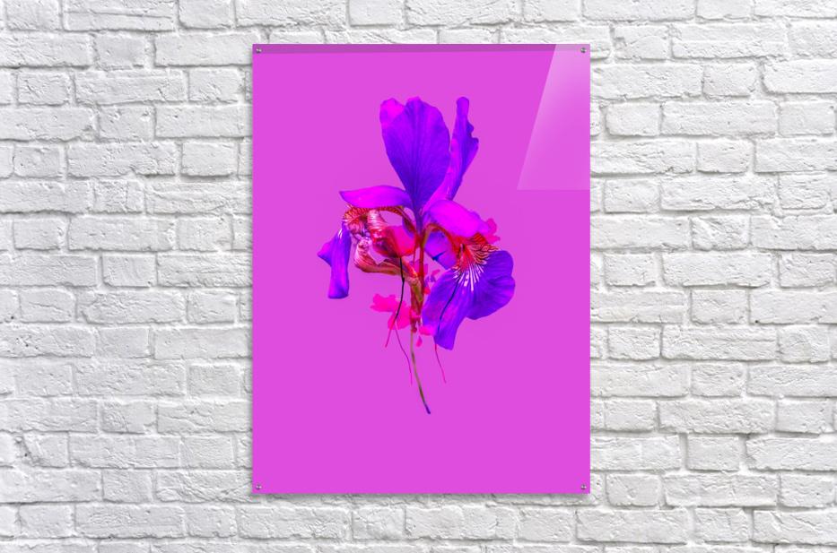 2AA2B863 A8C5 4C62 A0DE DBF9CE5B7B4E  Acrylic Print