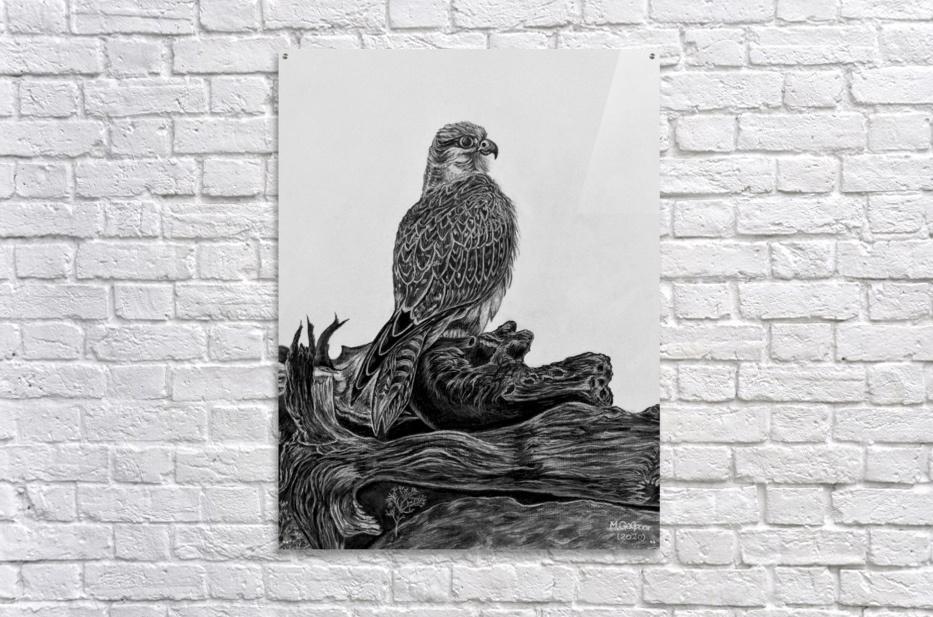 Gyrfalcon  Acrylic Print