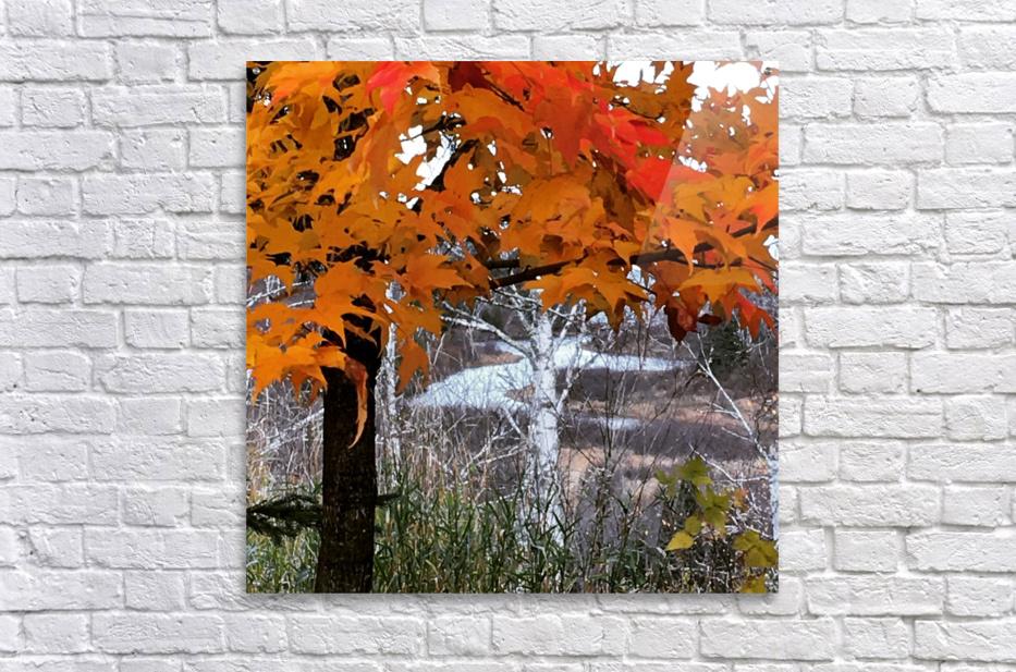 Autumn at Lake Superior  Acrylic Print