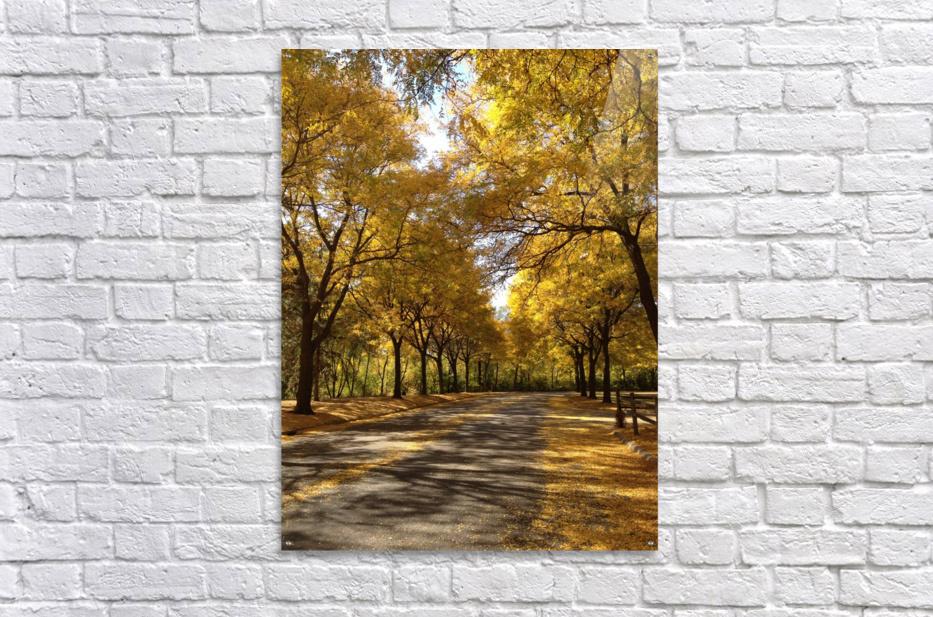 Autumn on Olivers End  Acrylic Print