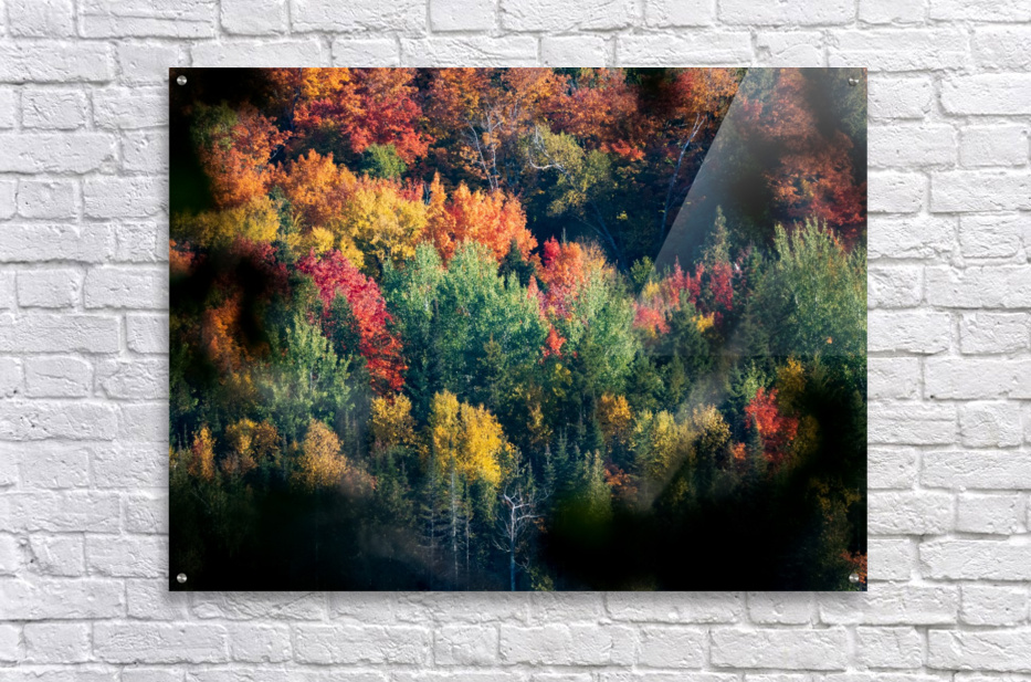 autumn abstract view  Acrylic Print