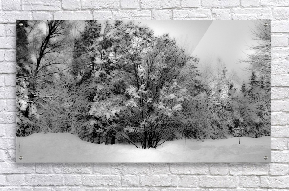 Obscure  Acrylic Print