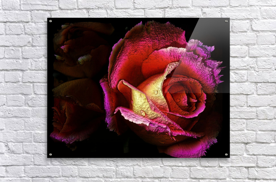 Textured Rose  Acrylic Print