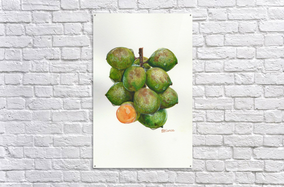Spanish Lime  Acrylic Print