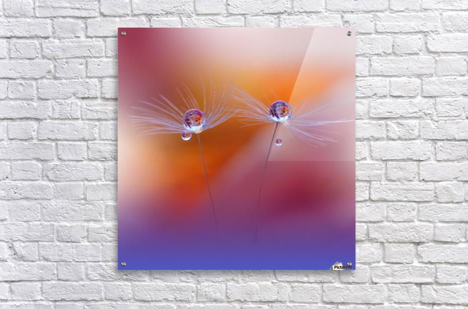 Two Worlds by Juliana Nan   Acrylic Print