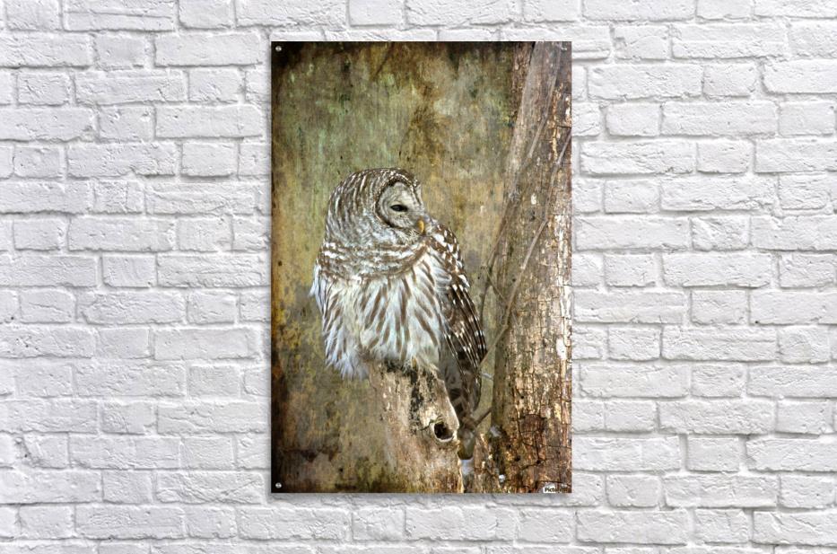 Grungy Owl  Acrylic Print