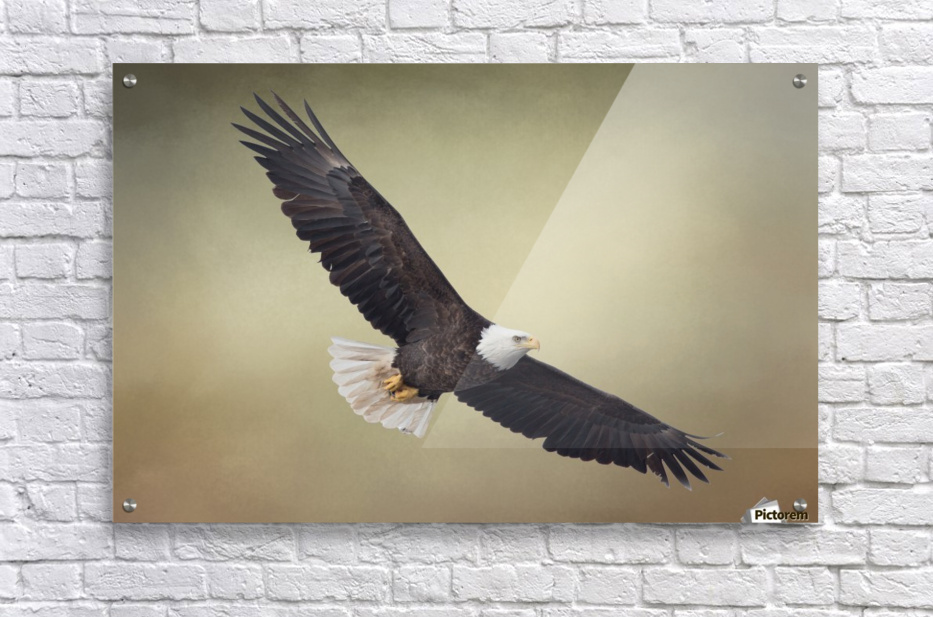 King of the Skies  Acrylic Print