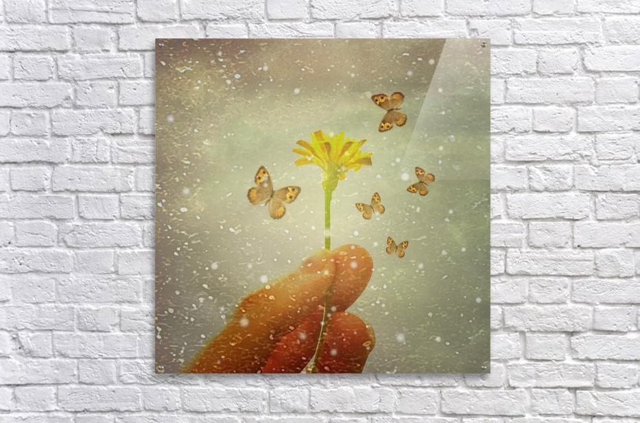 Butterflies Charmer  Acrylic Print