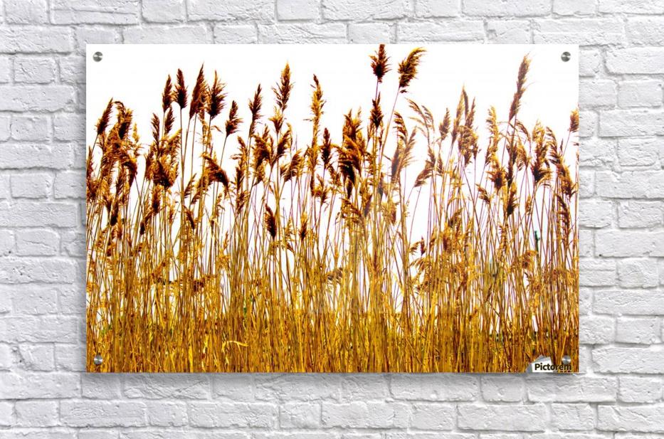 IMG_2852 2  Acrylic Print