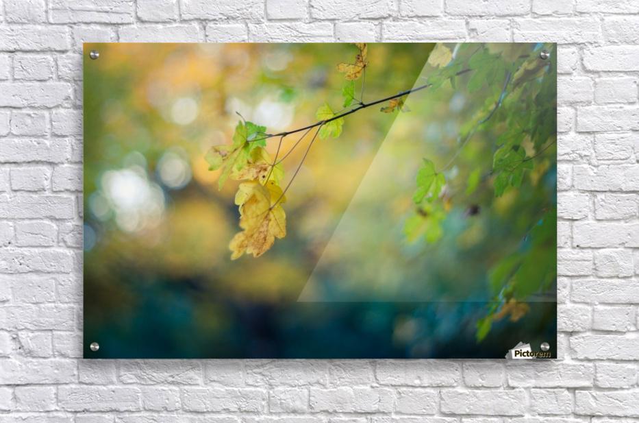 Beautiful autumn background  Acrylic Print