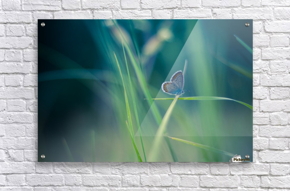 Butterfly summer background  Acrylic Print