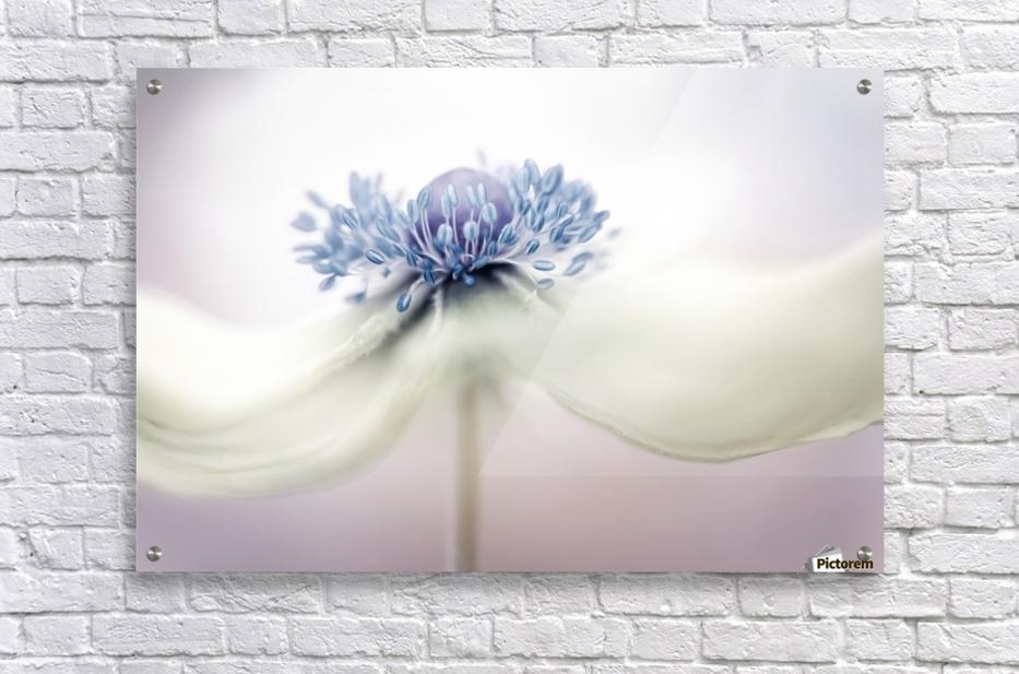 Anemone  Impression acrylique
