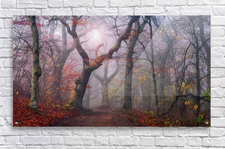 Walking the old path.  Acrylic Print