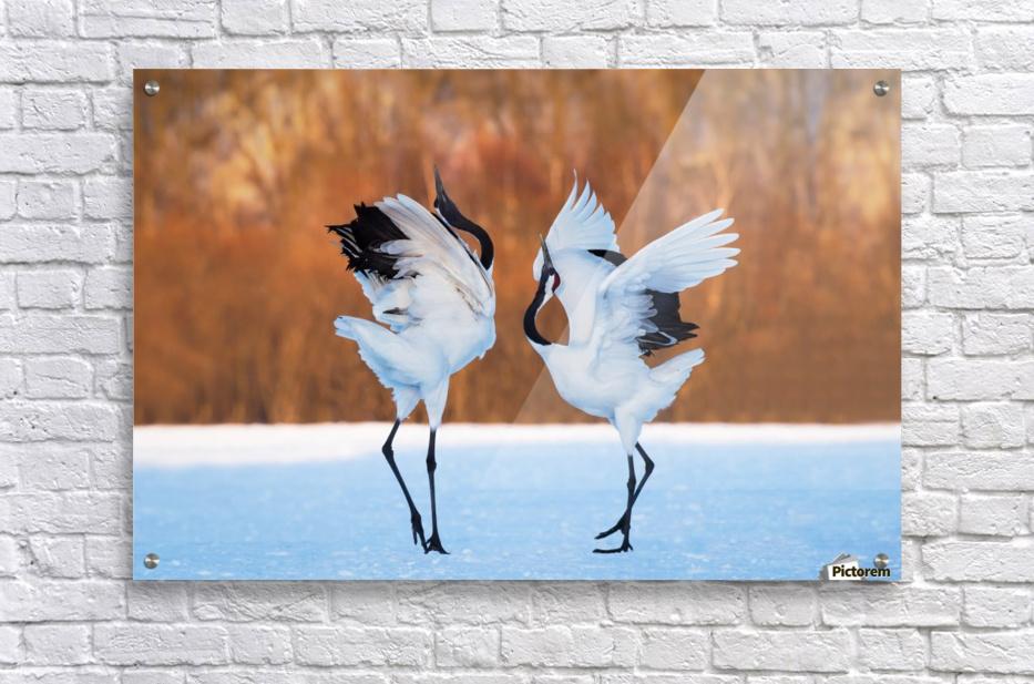 The dance of love  Acrylic Print