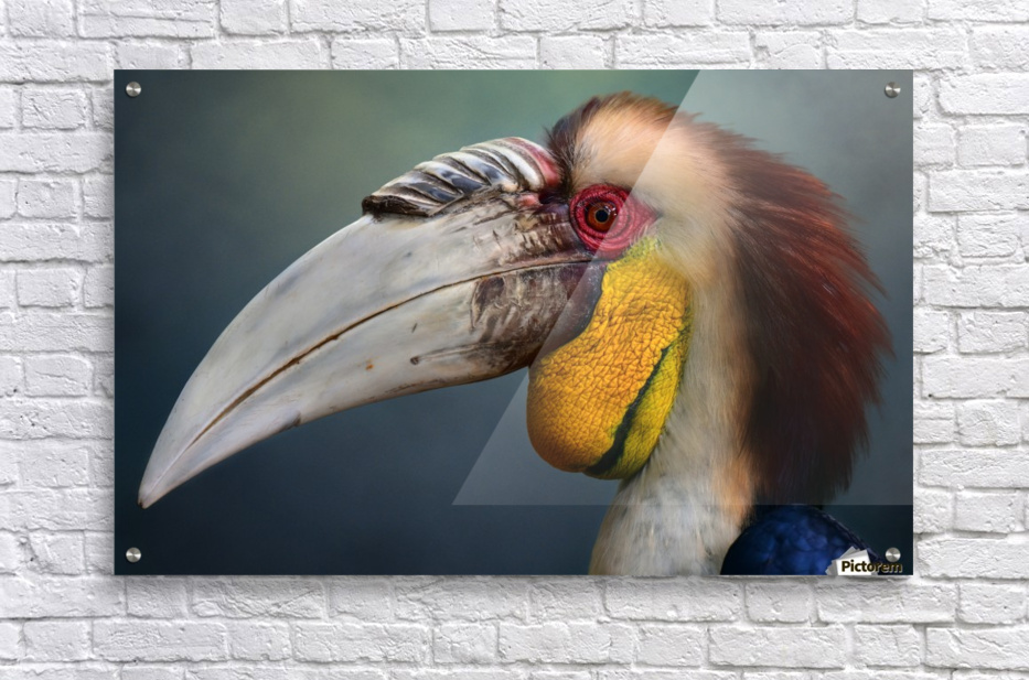Jabrix  Acrylic Print