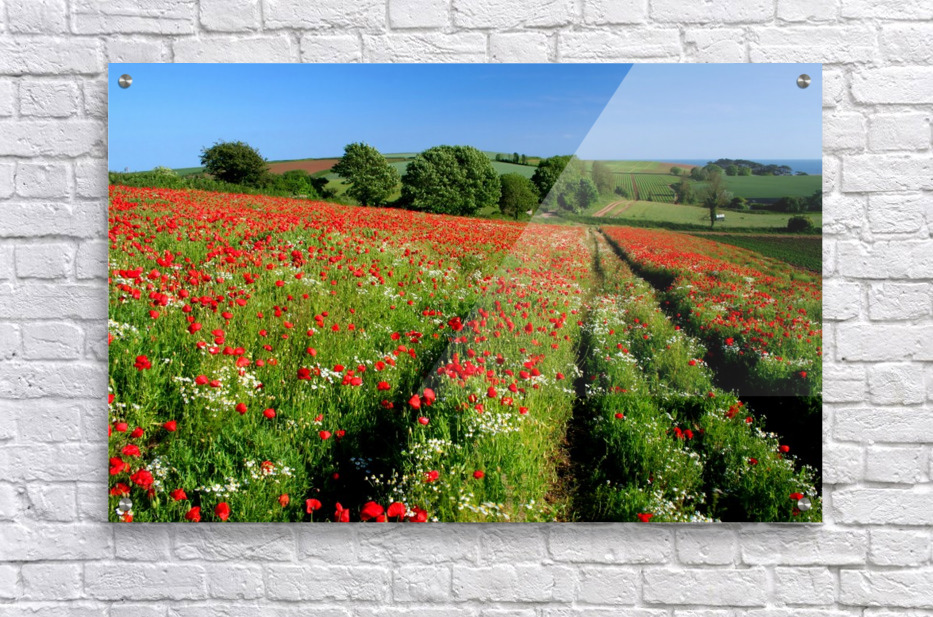 Ablaze of colour  Acrylic Print