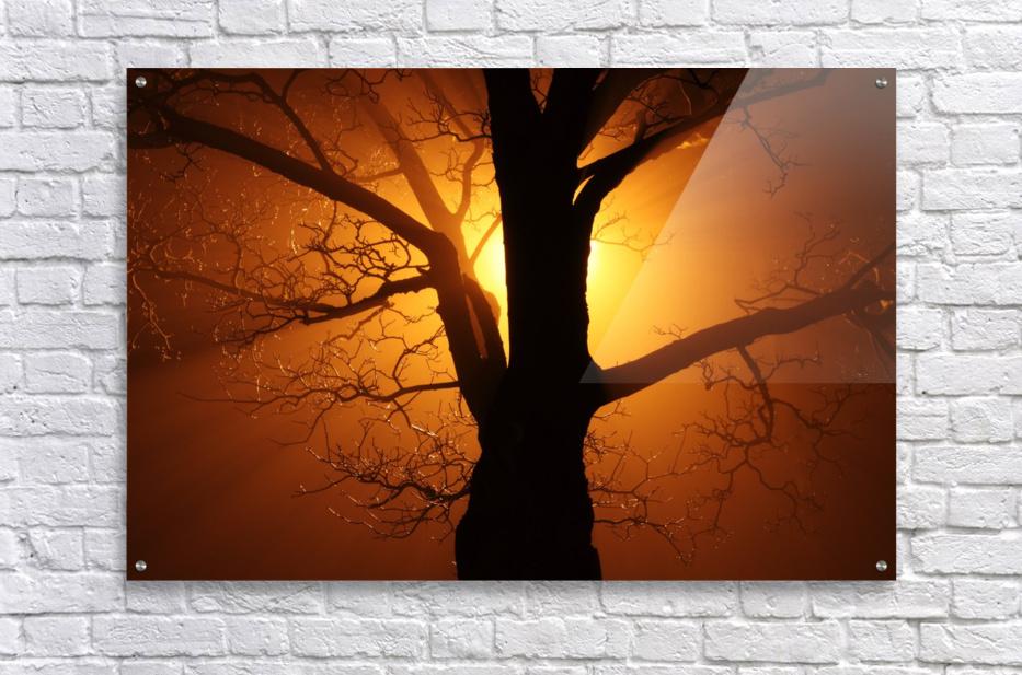 abstract sun tree  Acrylic Print