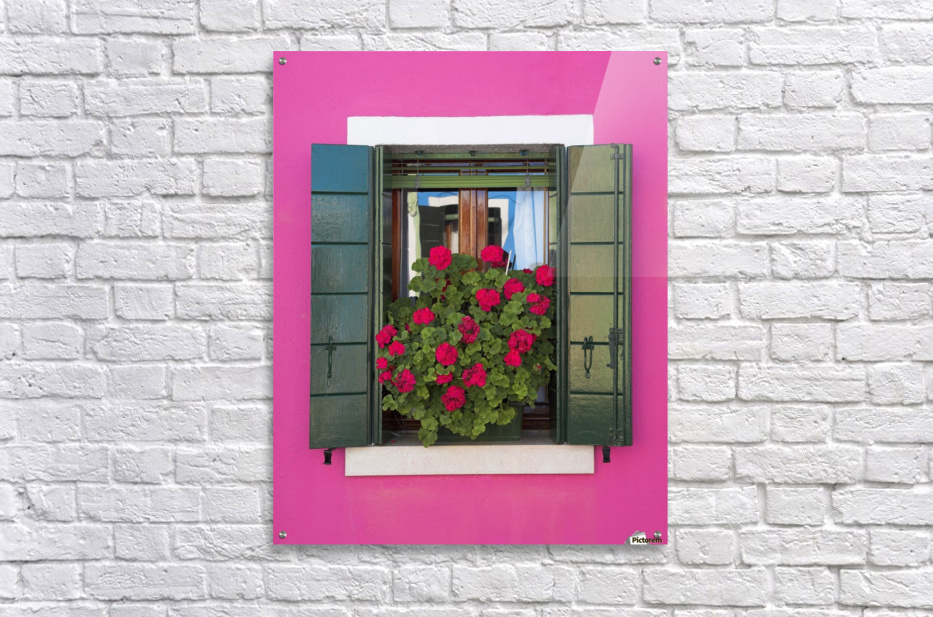 Pink Wall And Green Shutters, Burano, Italy  Acrylic Print