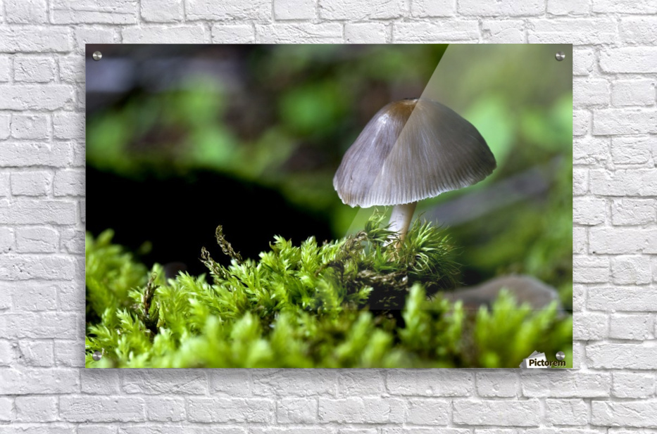 Closeup Of Mushroom  Acrylic Print
