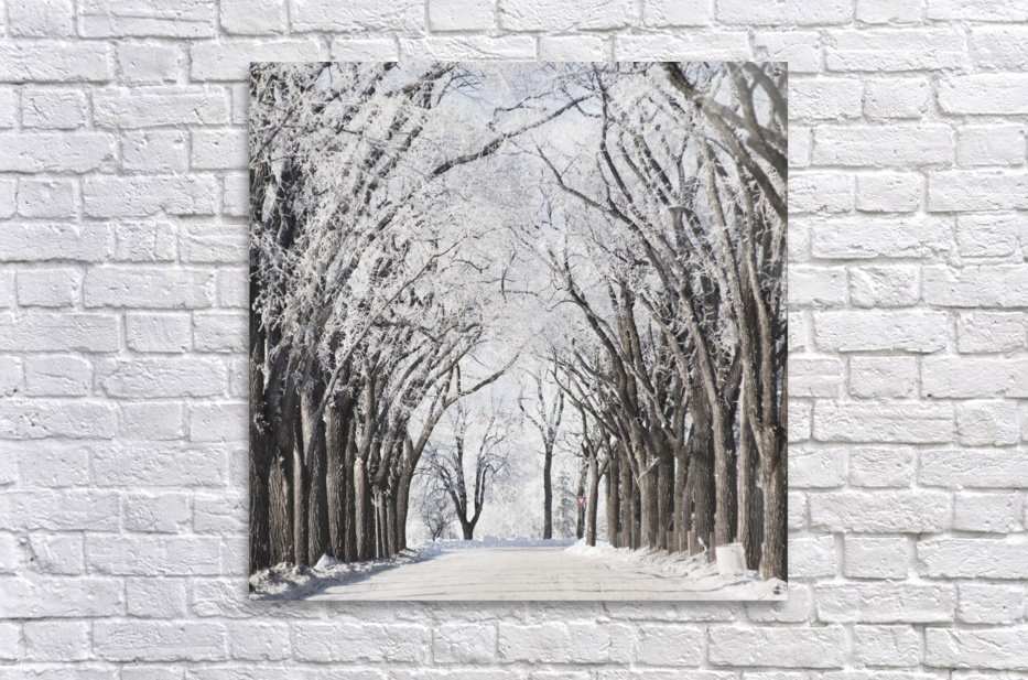 Winnipeg, Manitoba, Canada; A Road And Trees Covered In Snow In Winter  Acrylic Print