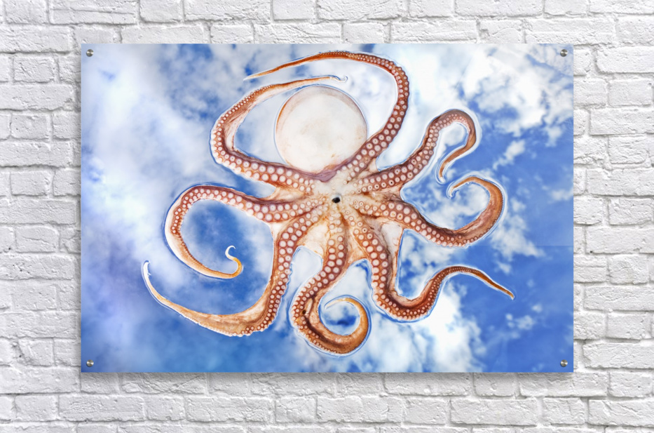 An octopus with blue sky and cloud in the background  Acrylic Print