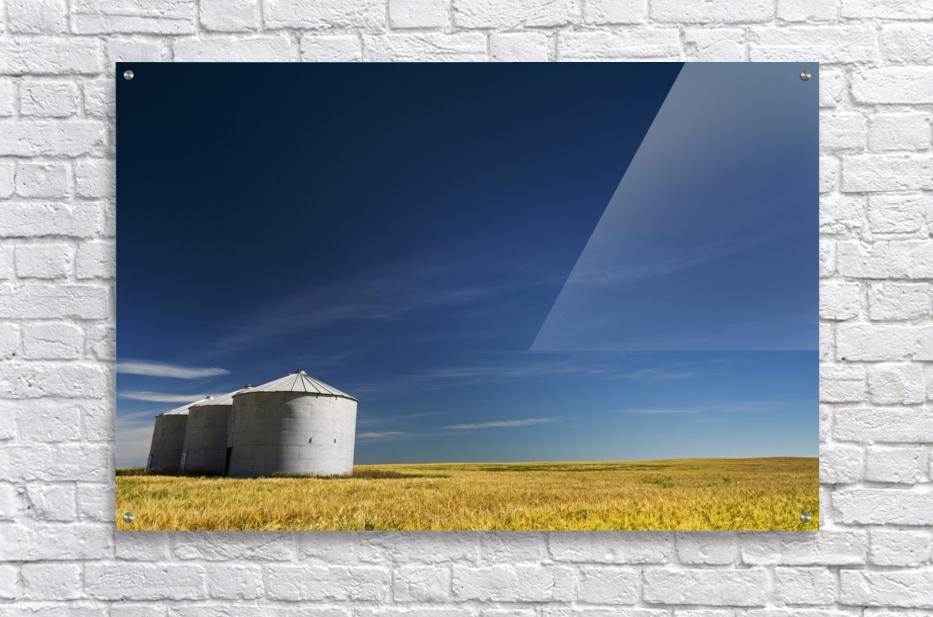 Large metal grain bins in a barley field with blue sky and wispy clouds; Acme, Alberta, Canada  Acrylic Print