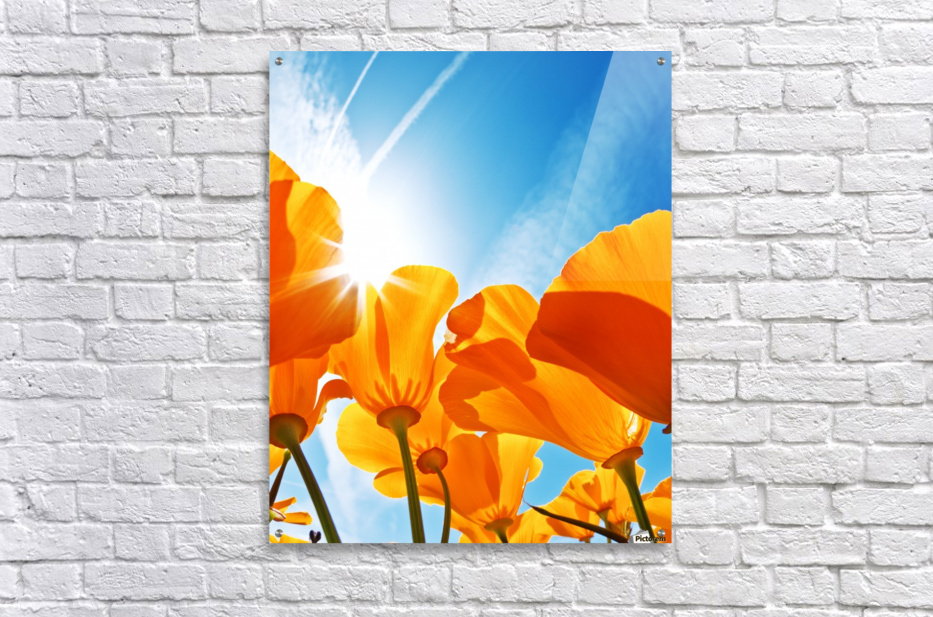 Field of Flowers with Blue Sky, Macro View  Acrylic Print