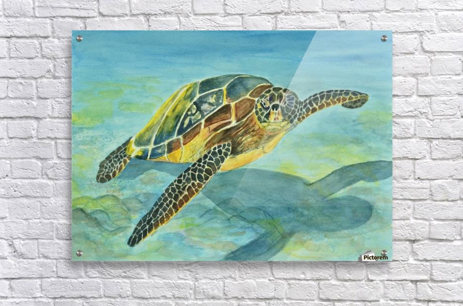 Sea Turtle  Acrylic Print