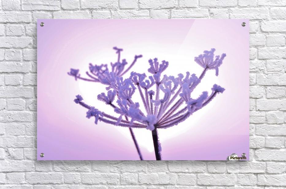 Pink tint  Acrylic Print