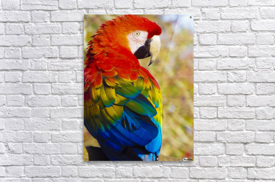 All the Colors of the Rainbow  Acrylic Print